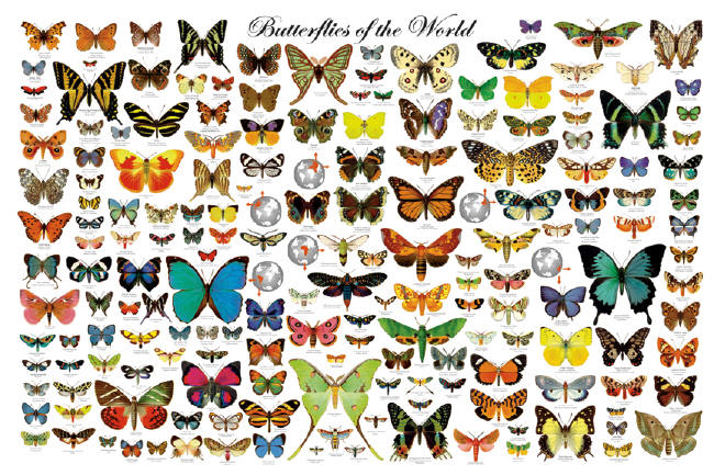 Image result for all about butterflies